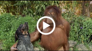 71 Gambar Binatang Lucu Terbaru HD